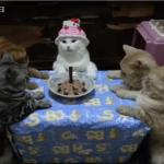 お誕生会の出し物にゃんていらない!?ハッピーバースデーの歌を待ちきれずにケーキを食べようとする子猫動画!