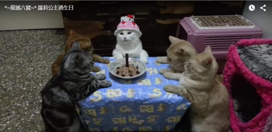子猫誕生会
