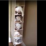 子猫マンションに住む5匹の子猫の物語!大暴れして大騒ぎの子猫動画!