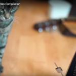 こんなねこあつめてみた! たからもののメトロノームとじゃれあう10匹のネコ動画集!