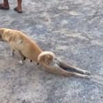 【爆笑動画集】足を滑らす老犬・・「かわいそう・・」と思ったらカモにされる!?(笑)超ズル賢い犬の驚きの演技とは!?