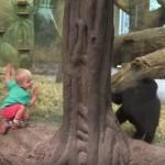 ゴリラの赤ちゃんの顔をのぞきこみ追いかけっこ!?1週間で130万回再生された男の子とゴリラの赤ちゃんの微笑ましい動画!?